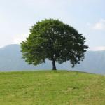 albero liedolo 002