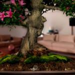 albero-donna1